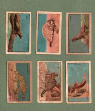 SIAM old Thailand cigarette cards tobacco inserts #998